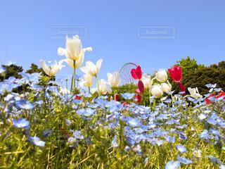 花畑の写真・画像素材[4337555]