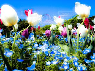 青空と花畑の写真・画像素材[4337557]