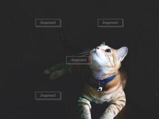 見上げる猫の写真・画像素材[4609181]