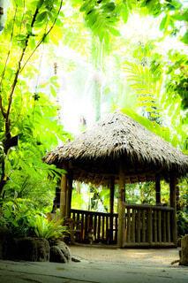 木々の中の小屋の写真・画像素材[4798878]