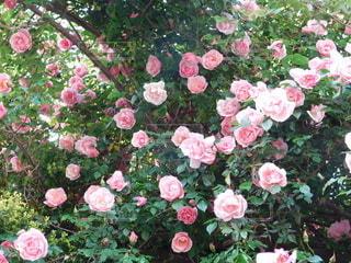 植物の上のピンクの花の写真・画像素材[3214932]