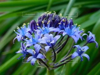 自然,花,庭,紫,草木,ガーデン