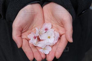 花,桜,屋内,手,平和,草木