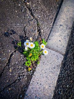 花,道,散歩道,アスファルト,草木