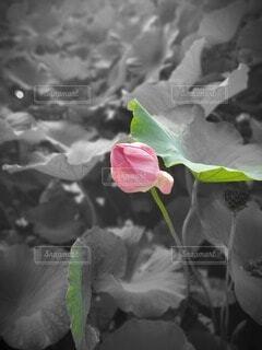 花のクローズアップの写真・画像素材[3686334]