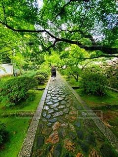 公園の木の写真・画像素材[3687081]