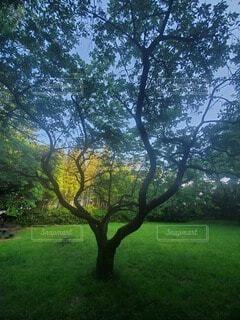 大きな緑の木の写真・画像素材[3687084]