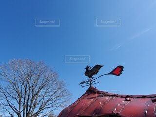 木の上に座っているオウムの写真・画像素材[3691728]