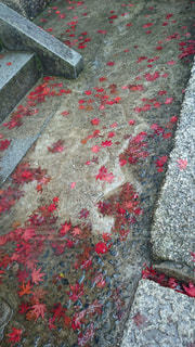 風景,紅葉,屋外