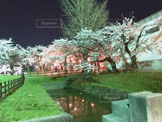 空,公園,花,春,桜,夜空,屋外,緑,きれい,綺麗,水,川,水面,夜桜,景色,反射,観光,草,樹木,新緑,儚い,草木,名所,観光名所,ガーデン,五稜郭公園