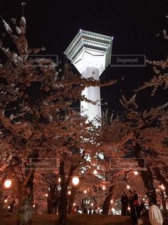 空,公園,建物,春,桜,夜,屋外,きれい,綺麗,夜桜,観光,タワー,樹木,塔,明るい,函館,儚い,五稜郭,五稜郭タワー,草木,名所,観光名所,キレイ,五稜郭公園