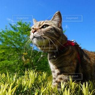 猫,空,動物,屋外,青空,景色,見上げる,ねこ,猫と青空,青空と猫