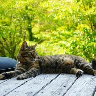 猫,動物,屋外,景色,寝転ぶ,樹木,ねこ,寝る,くつろぐ,森林浴,癒される