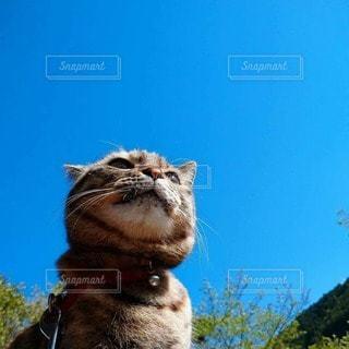 猫,空,青空,ねこ,日中,見上げて,青空とねこ