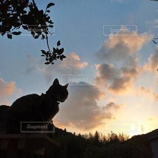 猫,空,夕日,太陽,雲,夕焼け,夕暮れ,ねこ,クラウド