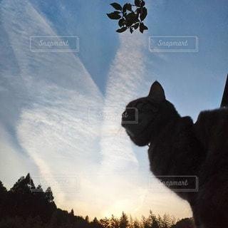 猫,空,夕日,雲,夕暮れ,光,飛行機雲,輝く
