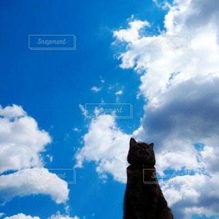 猫,空,雲,青空,青,見上げる,ねこ,クラウド,青空と猫