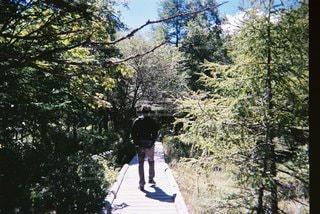 男性,自然,風景,森林,木,樹木
