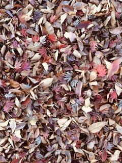 落ち葉の絨毯の写真・画像素材[3220485]