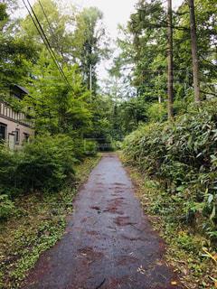 自然,森林,木,散歩,景色,雨上がり