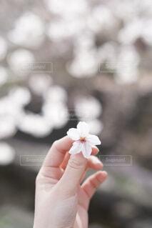 花を持つ手の写真・画像素材[4319822]
