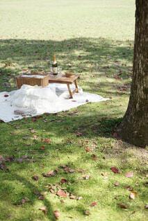 芝生の上に座っている芝生の椅子のグループの写真・画像素材[4340461]