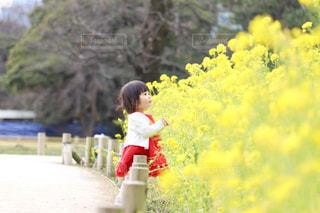 自然,風景,花,春,屋外,菜の花,子供,少女,人物,人,赤ちゃん,幼児,赤いワンピース,黄色と赤