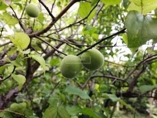 自然,木,緑,季節,植木,梅雨,四季