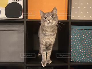 #ペット,#猫,#おうち時間,#猫がいる暮らし
