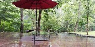 雨の高原の写真・画像素材[3222671]
