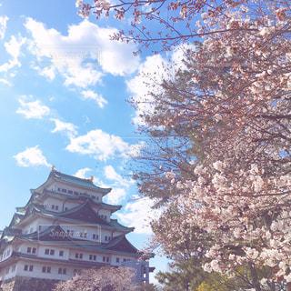 風景,空,建物,花,春,桜,雲,樹木,名古屋城