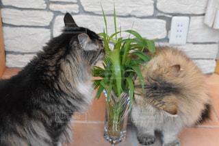 庭で摘んだ草を猫ちゃんたちに差し上げました✩︎の写真・画像素材[3250957]