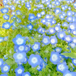 花のクローズアップの写真・画像素材[3596455]