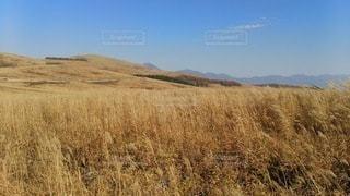 乾燥した草原の近くの写真・画像素材[3250660]