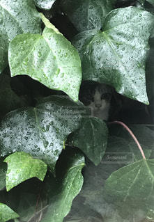 雨宿りする迷子の子猫の写真・画像素材[3226280]
