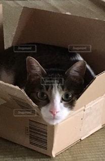 箱の中に座っている猫の写真・画像素材[3230011]