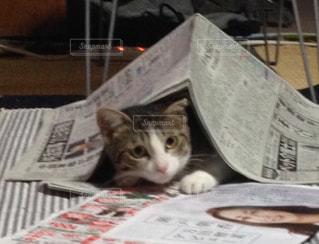 新聞に隠れたつもりの猫の写真・画像素材[3230013]