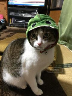 百均のマスクを被せられたペット猫の写真・画像素材[3230290]