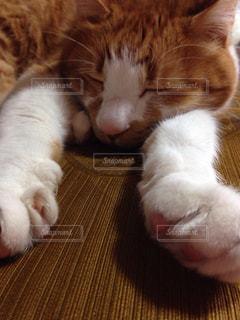 眠っている猫の写真・画像素材[3230302]