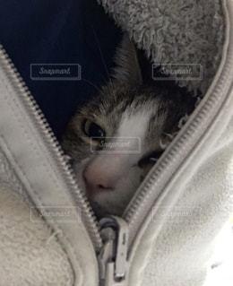 フリースの中の猫の写真・画像素材[3230405]