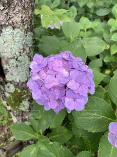 花園のクローズアップの写真・画像素材[3382376]