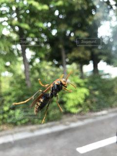 道路の脇にある昆虫の写真・画像素材[3571309]