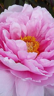 花のクローズアップの写真・画像素材[3271066]
