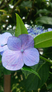 花の写真・画像素材[3273062]