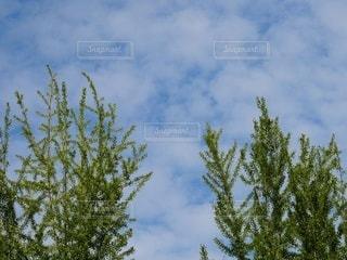 背の高い木の写真・画像素材[3336482]