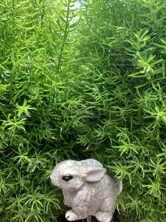 緑の中のウサギの写真・画像素材[3339038]