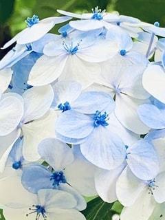 花のクローズアップの写真・画像素材[3382590]