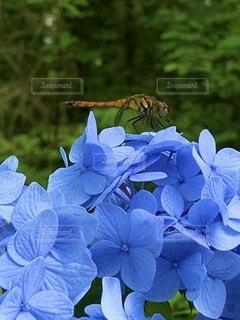 花のクローズアップの写真・画像素材[3382589]