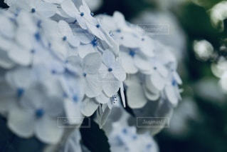 花のクローズアップの写真・画像素材[3394450]