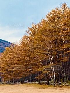 紅葉の並木の写真・画像素材[3712347]